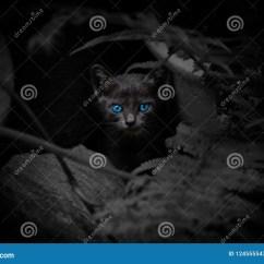 Boos Kitchen Islands Cabinet Design Software 与美丽的蓝眼睛的恶意嘘声库存图片 图片包括有万圣节 Beautifuler 投 与美丽的蓝眼睛的恶意嘘声
