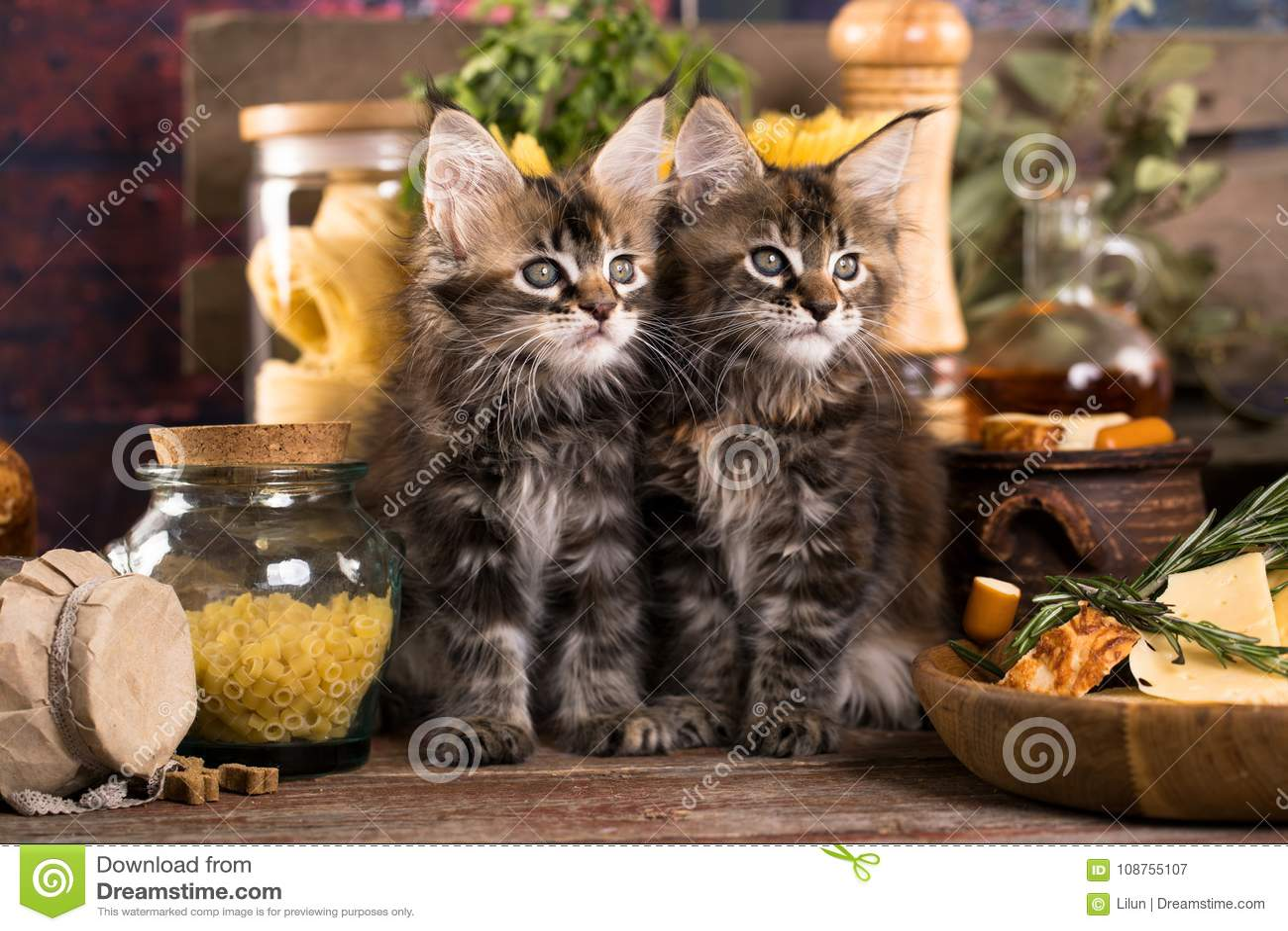 cats in the kitchen roller island 小猫和鱼新鲜在厨房里库存图片 图片包括有缅因 小猫 毛皮 小猫和鱼新鲜在厨房里