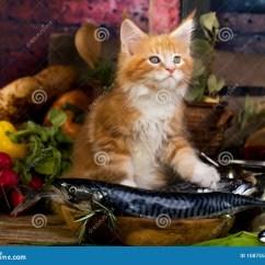 Cats In The Kitchen Discount Kitchens Melbourne 小猫和鱼新鲜在厨房里库存照片 图片包括有敌意 查找 蓝色 浣熊 耳朵 小猫和鱼新鲜在厨房里