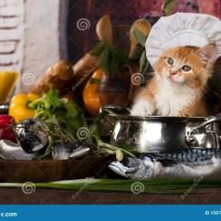 Cats In The Kitchen Shelf Ideas 小猫和鱼新鲜在厨房里库存图片 图片包括有橙色 敬慕 交配动物者 蓝色 小猫和鱼新鲜在厨房里