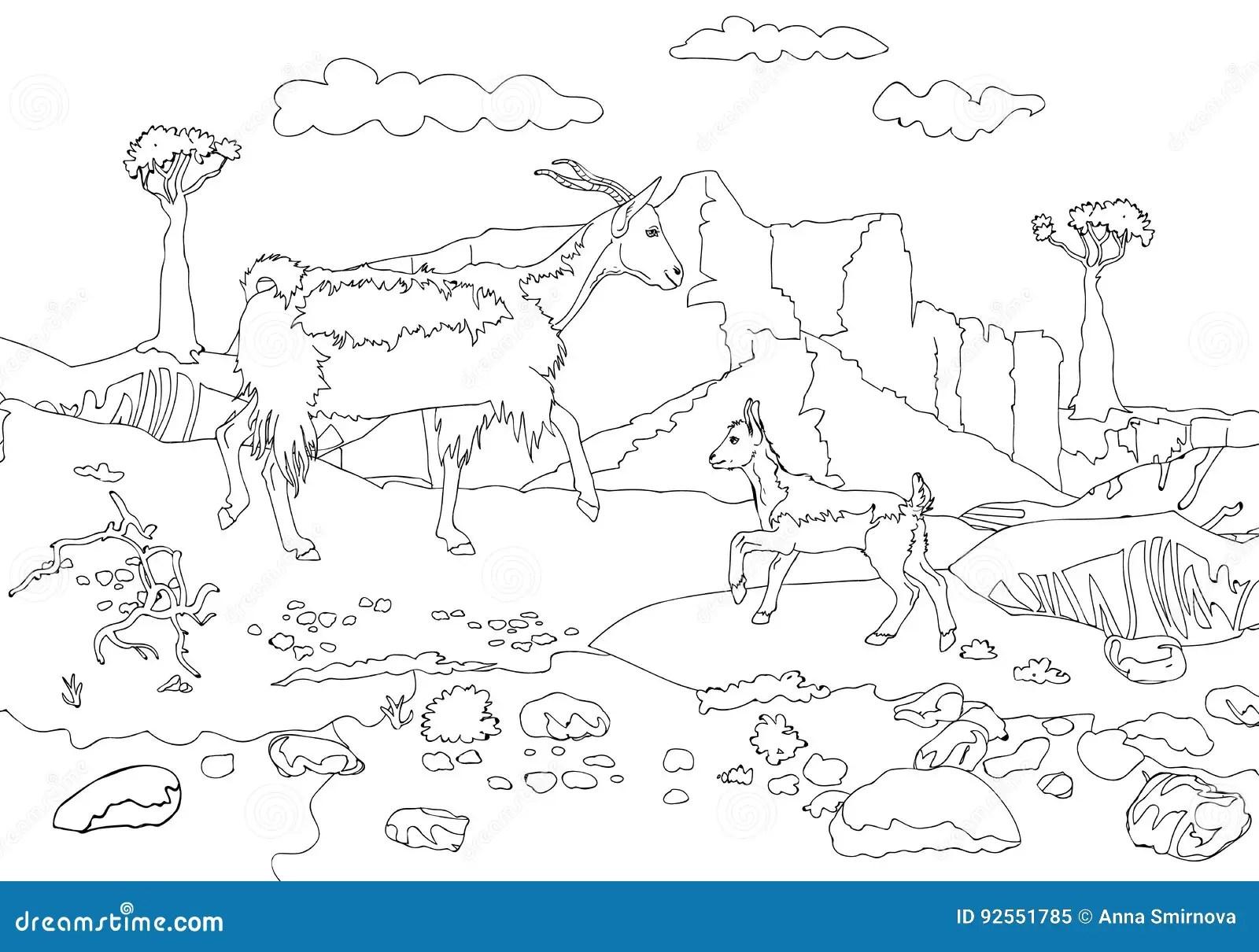 山羊和山羊在索科特拉岛山背景 成人上色的概述页 库存例证. 插画 包括有 环境, 动物区系, 横向, 乱画