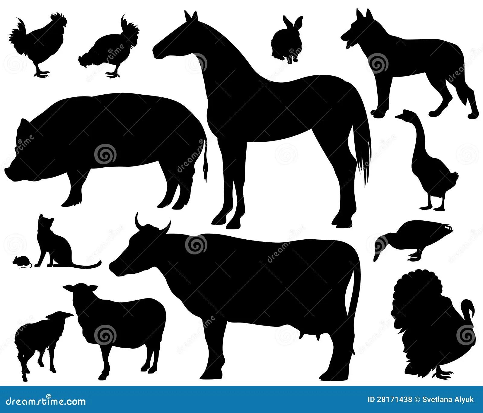 牲口 免版稅庫存照片 - 圖片: 28171438