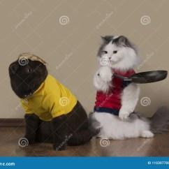 Cats In The Kitchen Cabinets With Crown Molding 猫在厨房里油煎薄煎饼库存照片 图片包括有似猫 天性 主妇 小猫 房子 猫在厨房里油煎薄煎饼