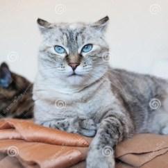 Cats In The Kitchen Backsplash Designs For 猫在厨房里库存照片 图片包括有敌意 宠物 逗人喜爱 全部赌注 查找 猫在厨房里