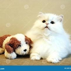 Kitchen Sink Rugs Black And White 猫狗玩具白色 免版税图库摄影 - 图片: 2491327