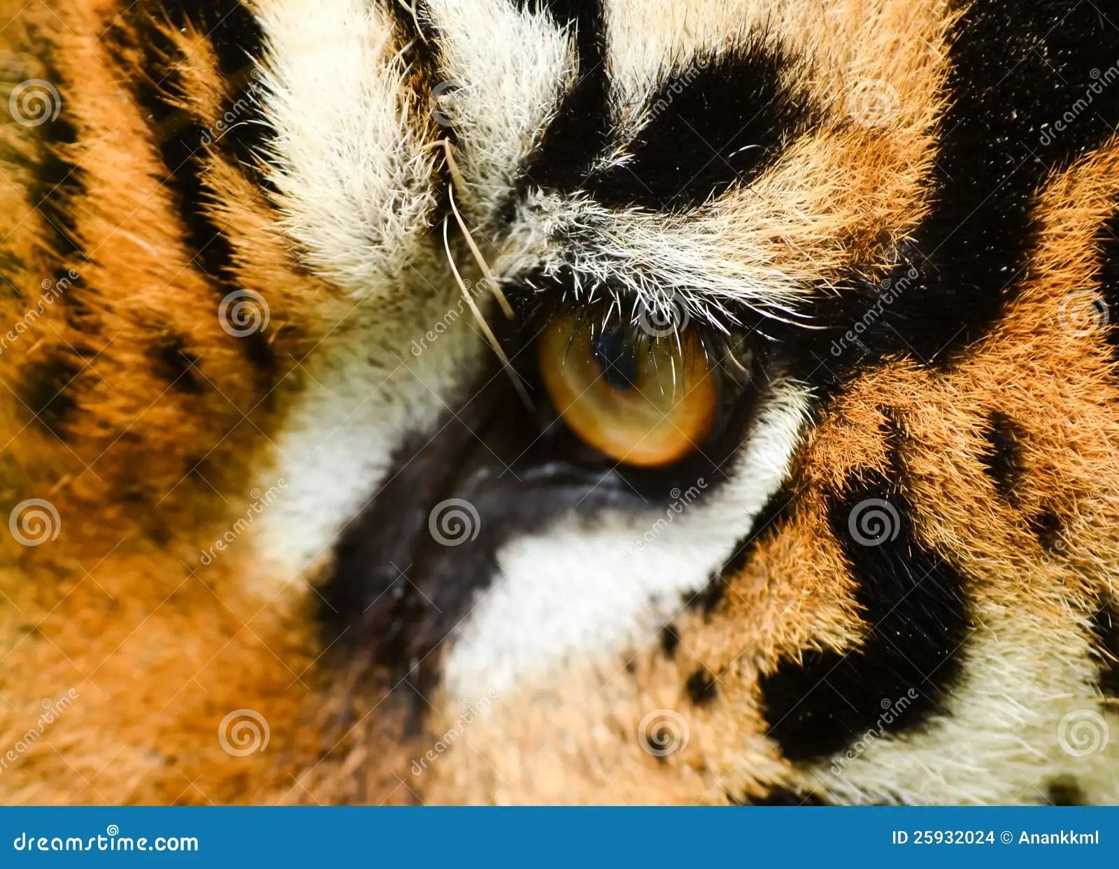 老虎眼睛 庫存圖片 - 圖片: 25932024