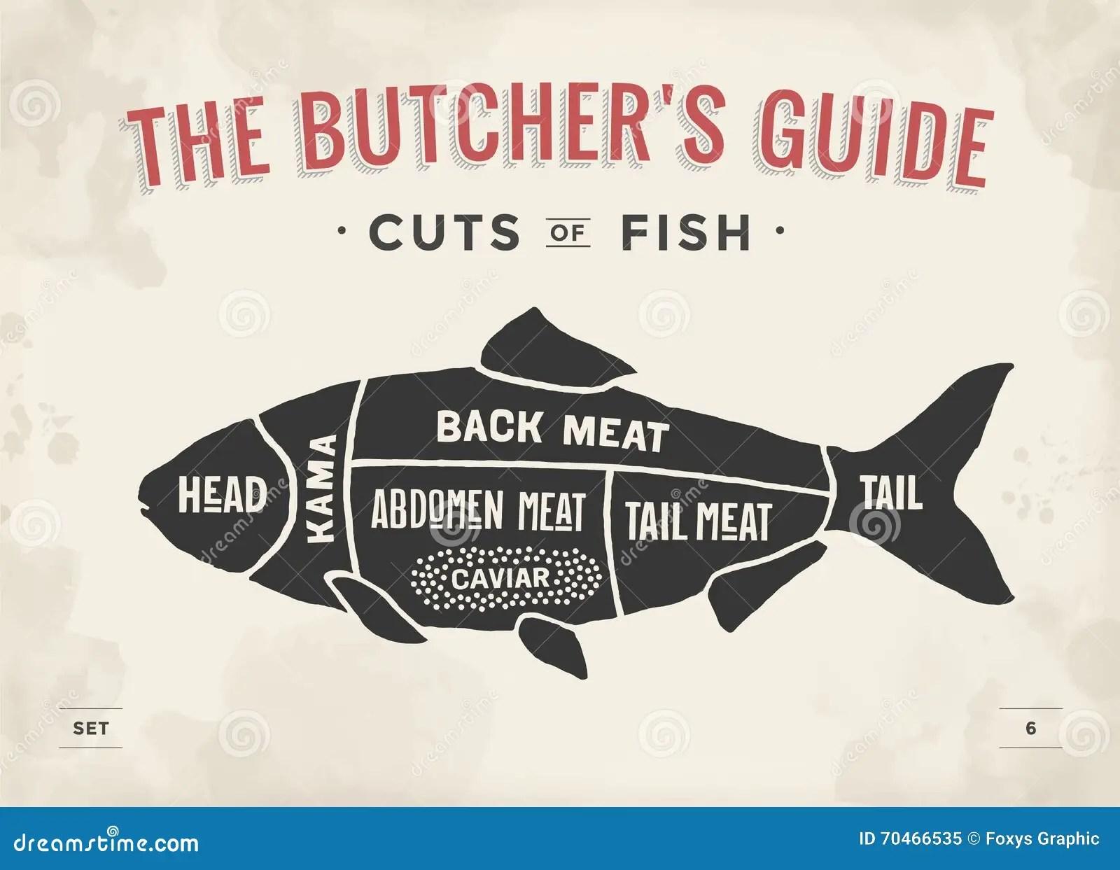 kitchen art prints pig 肉块集合海报屠户图和计划 鱼葡萄酒印刷手拉向量例证 插画包括有厨师 鱼葡萄酒印刷手拉