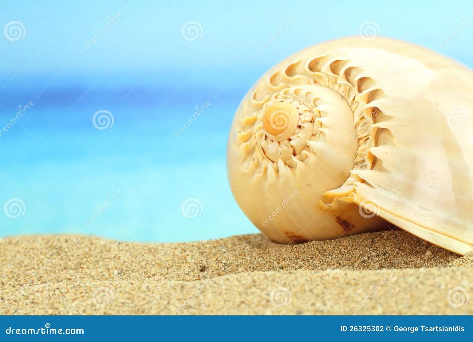 腹足動物的殼 圖庫攝影 - 圖片: 26325302