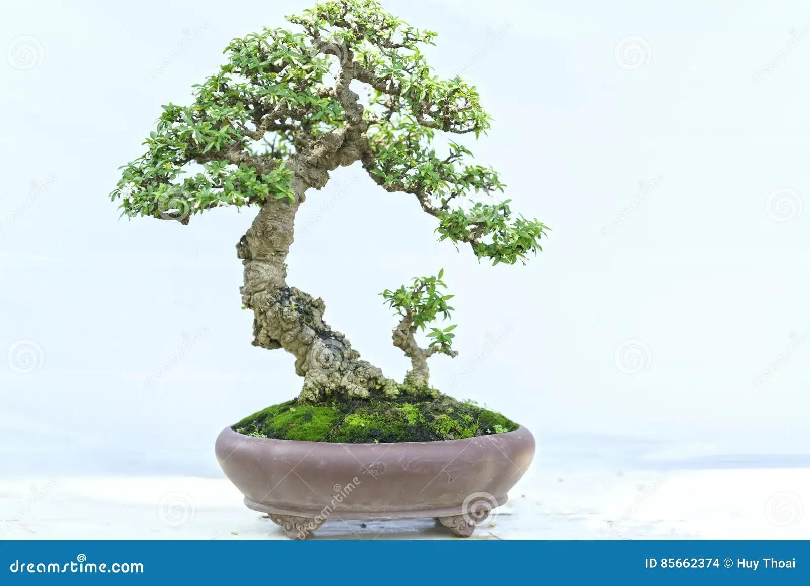 盆栽 畫像 - 花のイメージのコレクション