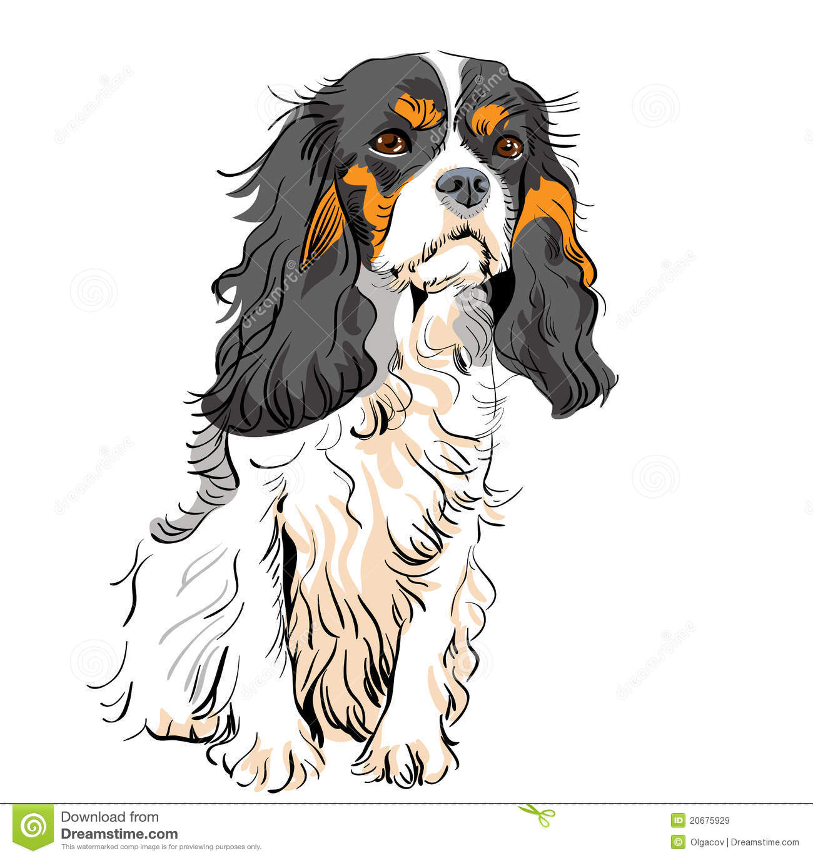 騎士查爾斯狗國王西班牙獵狗向量 免版稅庫存圖片 - 圖片: 20675929