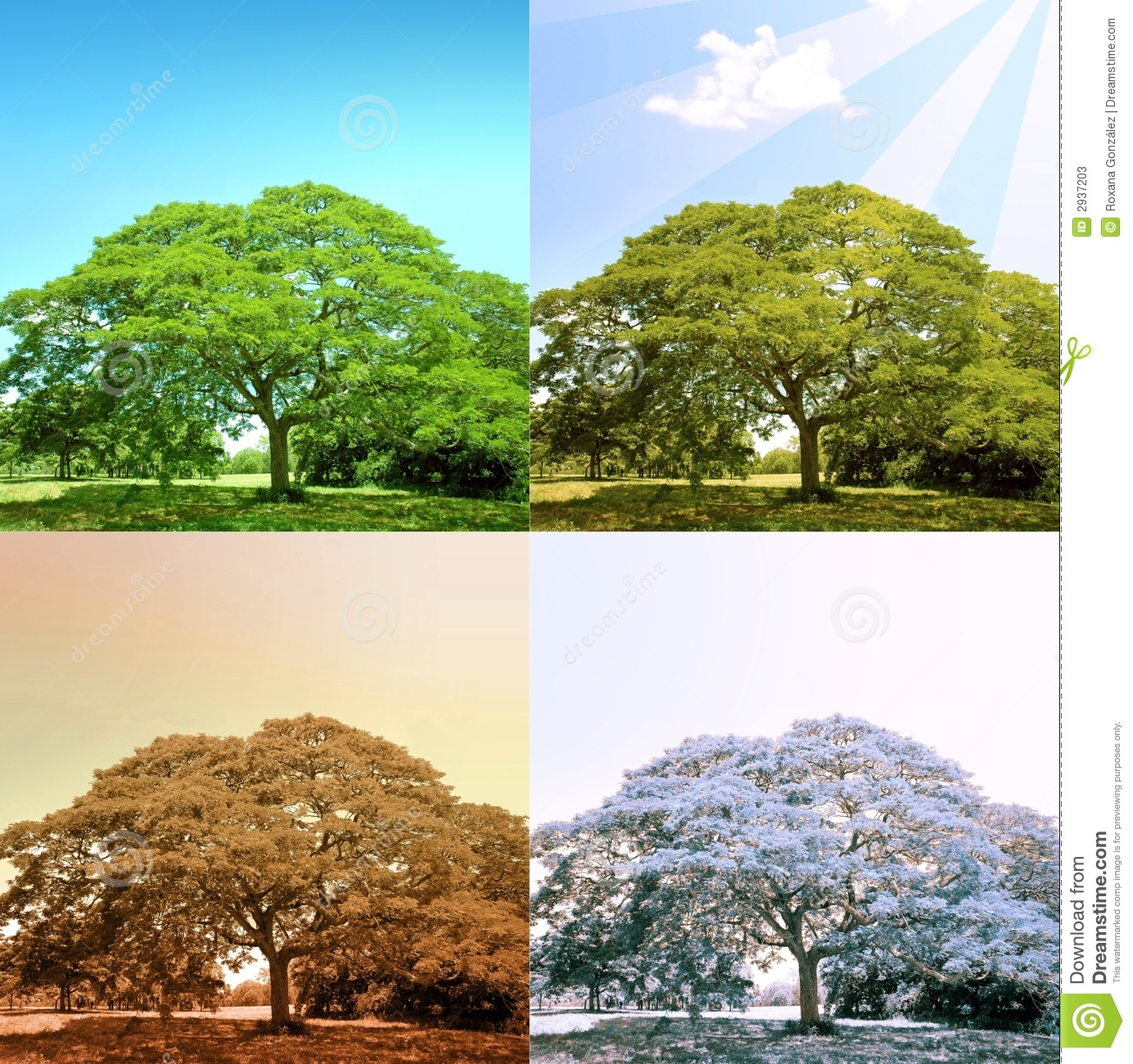 4 Seasons On A Tree Stock Image Image Of Lonely Greenery