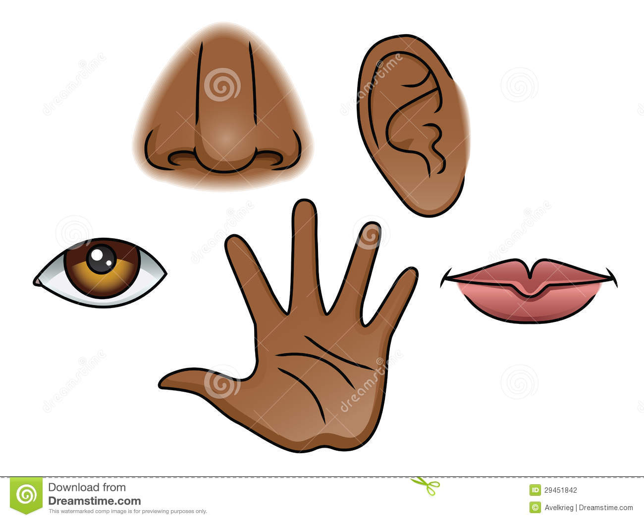 5 Senses Set Stock Vector Illustration Of Face Eps10