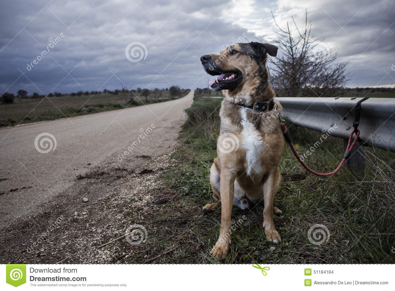 Abandoned Dog Stock Photo Image 51184184