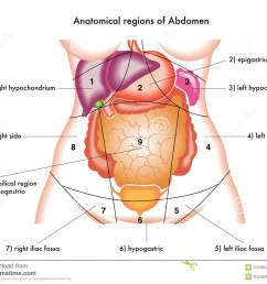 abdomen [ 1300 x 1065 Pixel ]