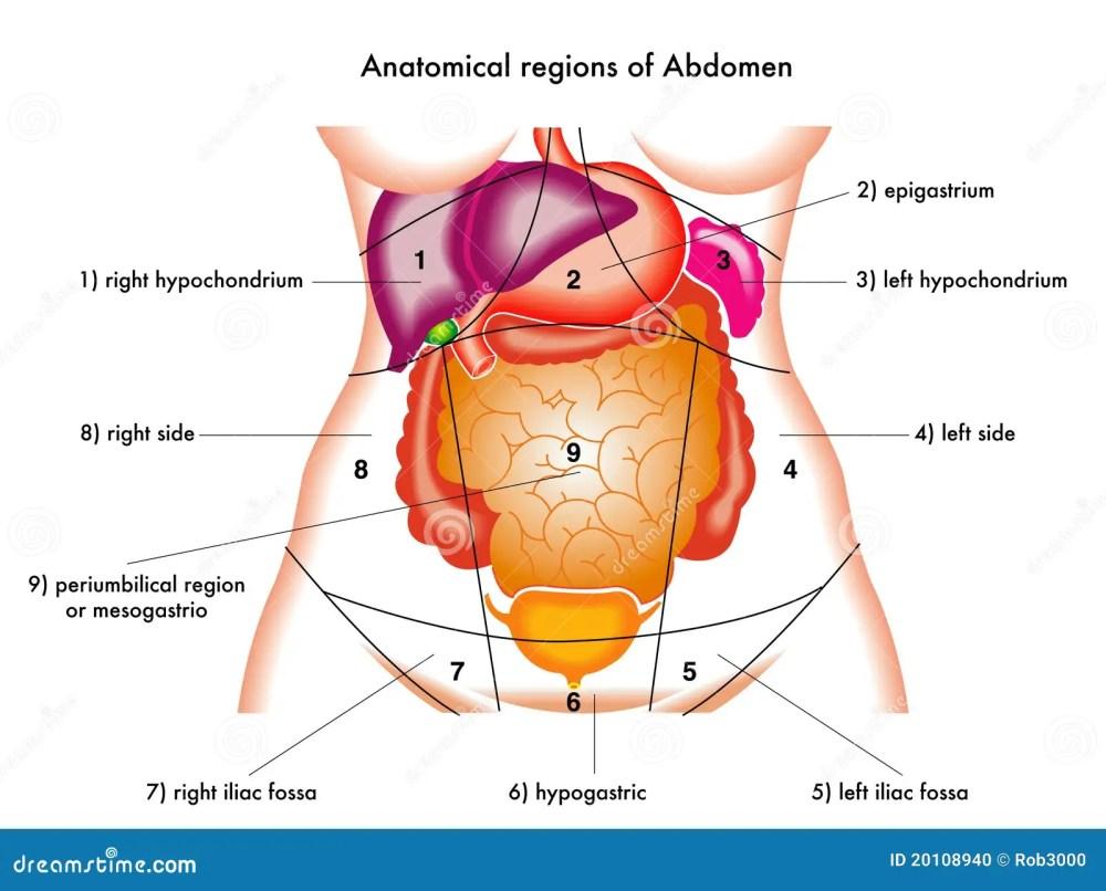 medium resolution of abdomen