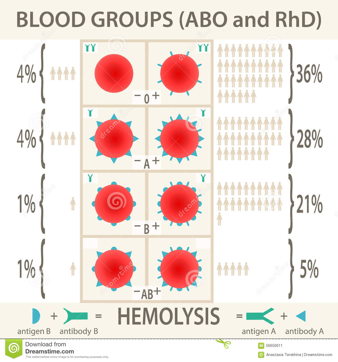 Abo And Rhd Blood Groups Systems Infographic Stock Vector