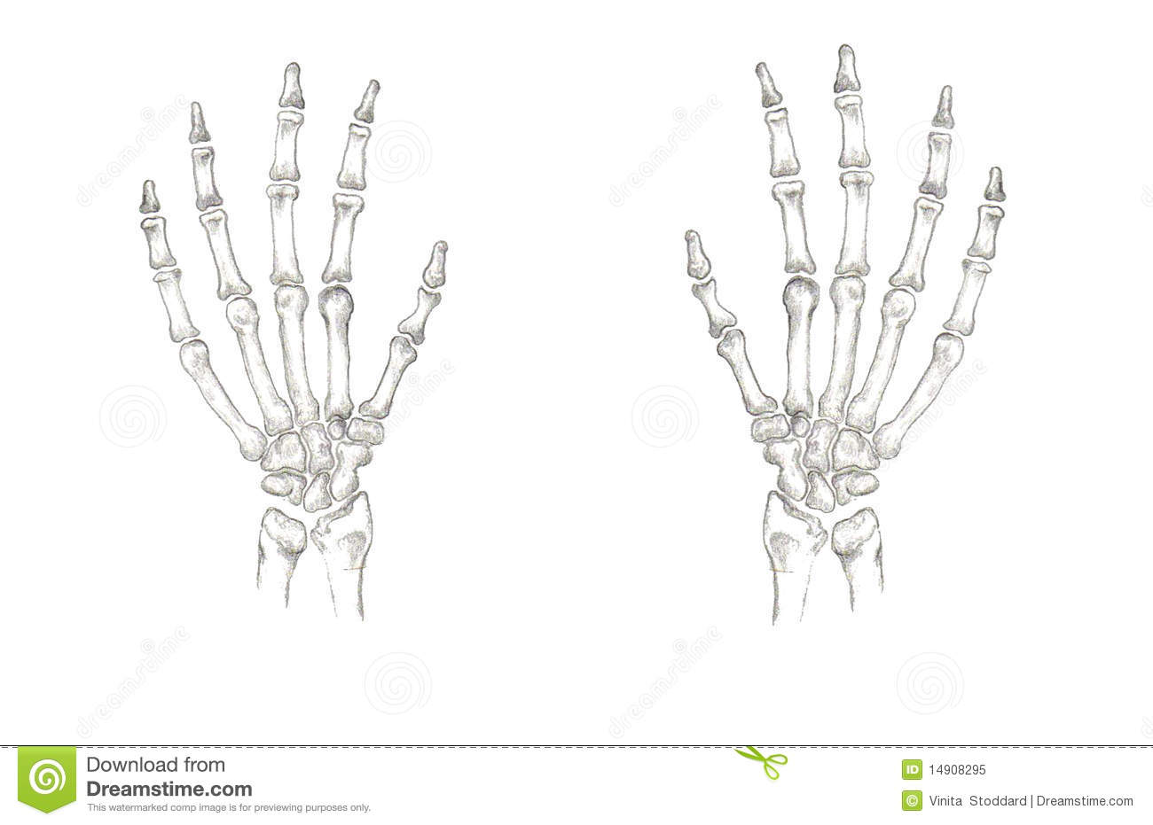 Accurate hand bones stock illustration. Illustration of