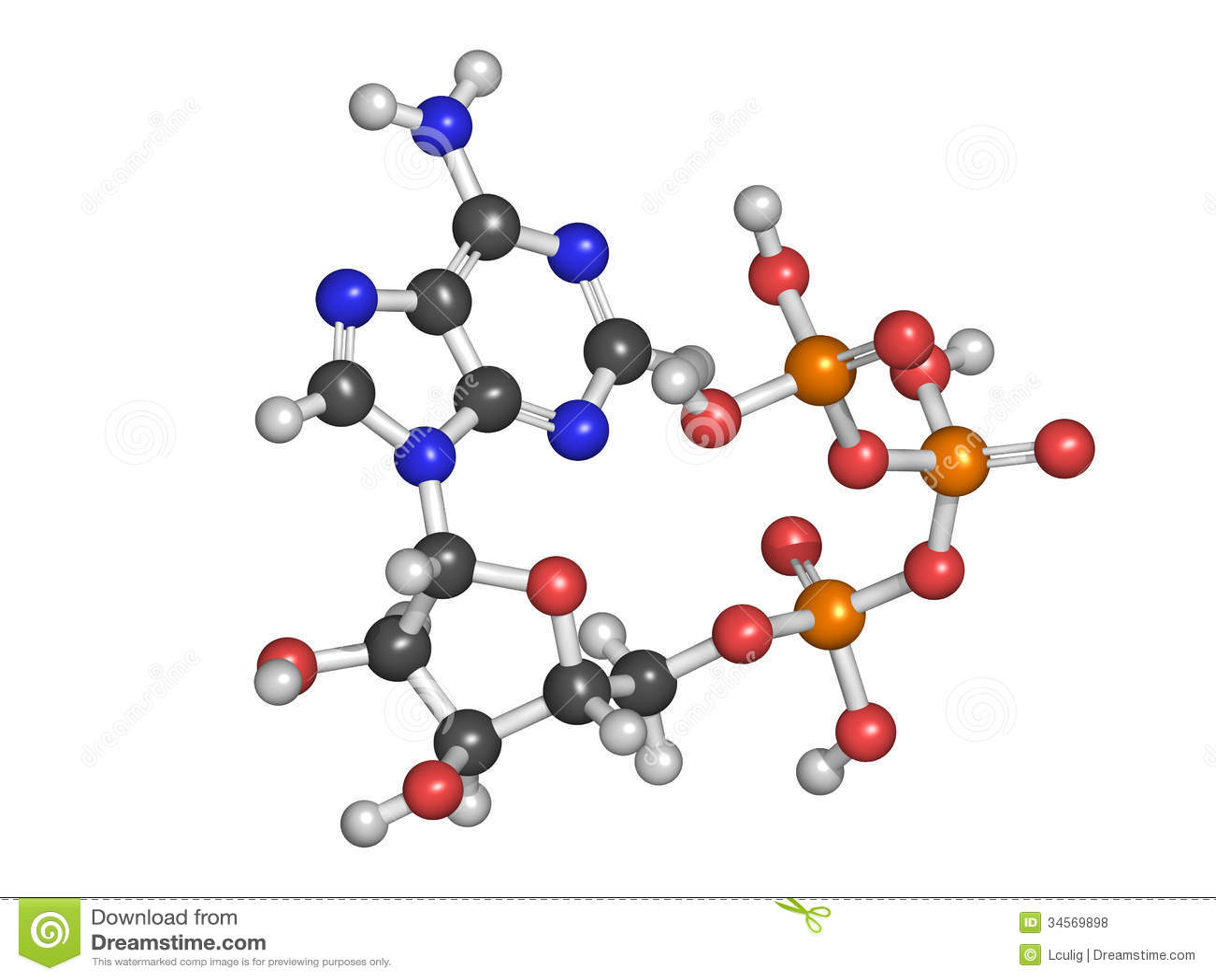 diagram of the atp molecule stress strain diagrams for engineering materials adenosine triphosphate energy transport