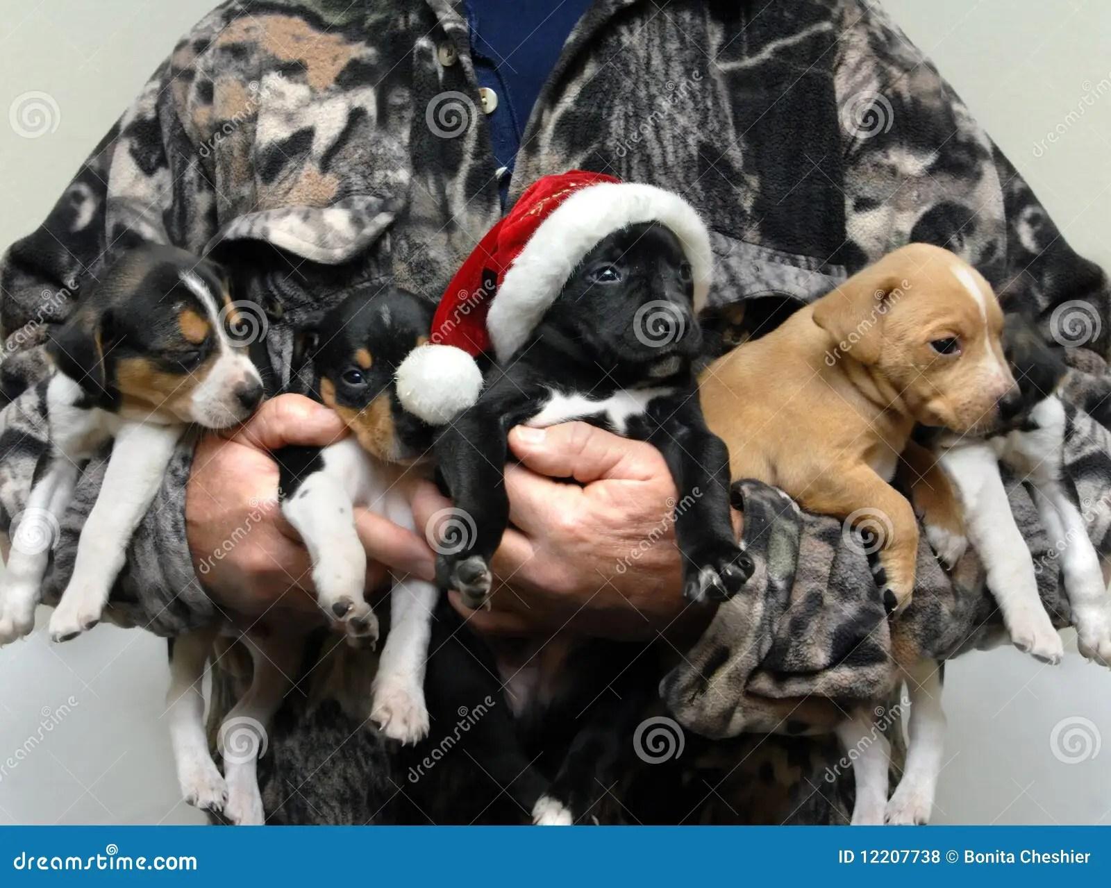 Adorable Hunting Dog For Christmas Royalty Free Stock