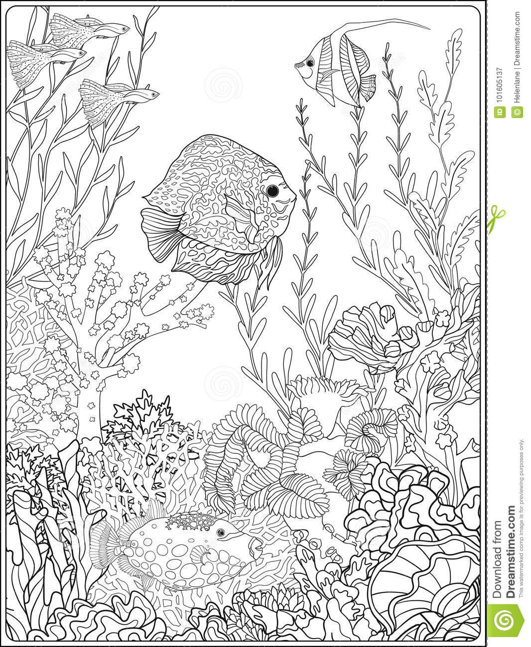 Coral Reef Coloring Page : coral, coloring, Coral, Coloring, Stock, Illustrations, Illustrations,, Vectors, Clipart, Dreamstime
