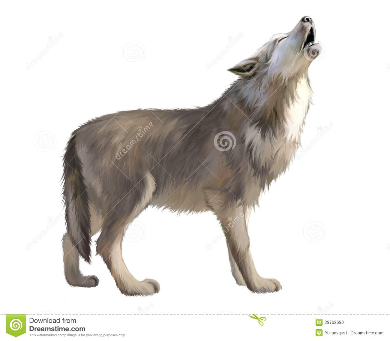 Adult Wolf Howl At The Moon Stock Photo Image 29762690
