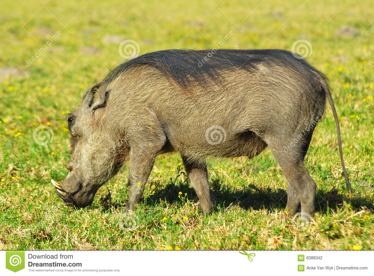 African Animal Stock Photography  Image 6388342