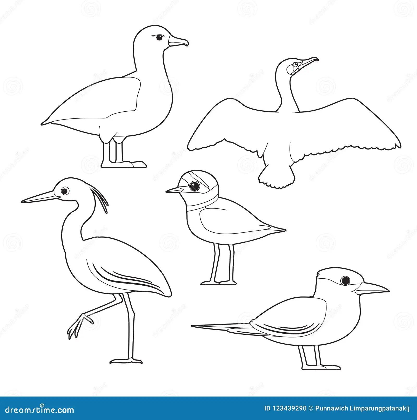 African Bird Coloring Book Albatross Cormorant Egret