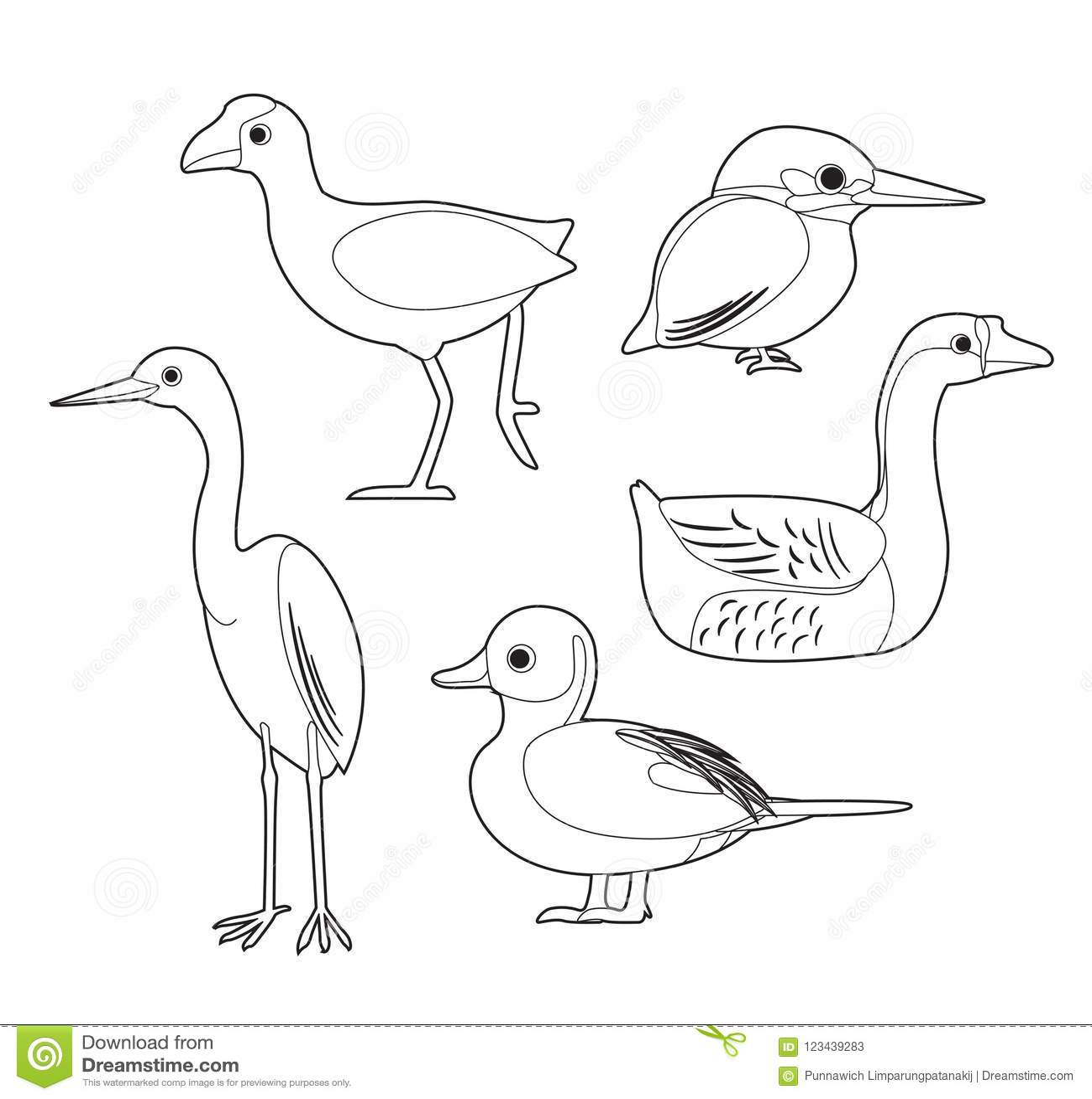 African Bird Coloring Book Moorhen Egret Duck Goose