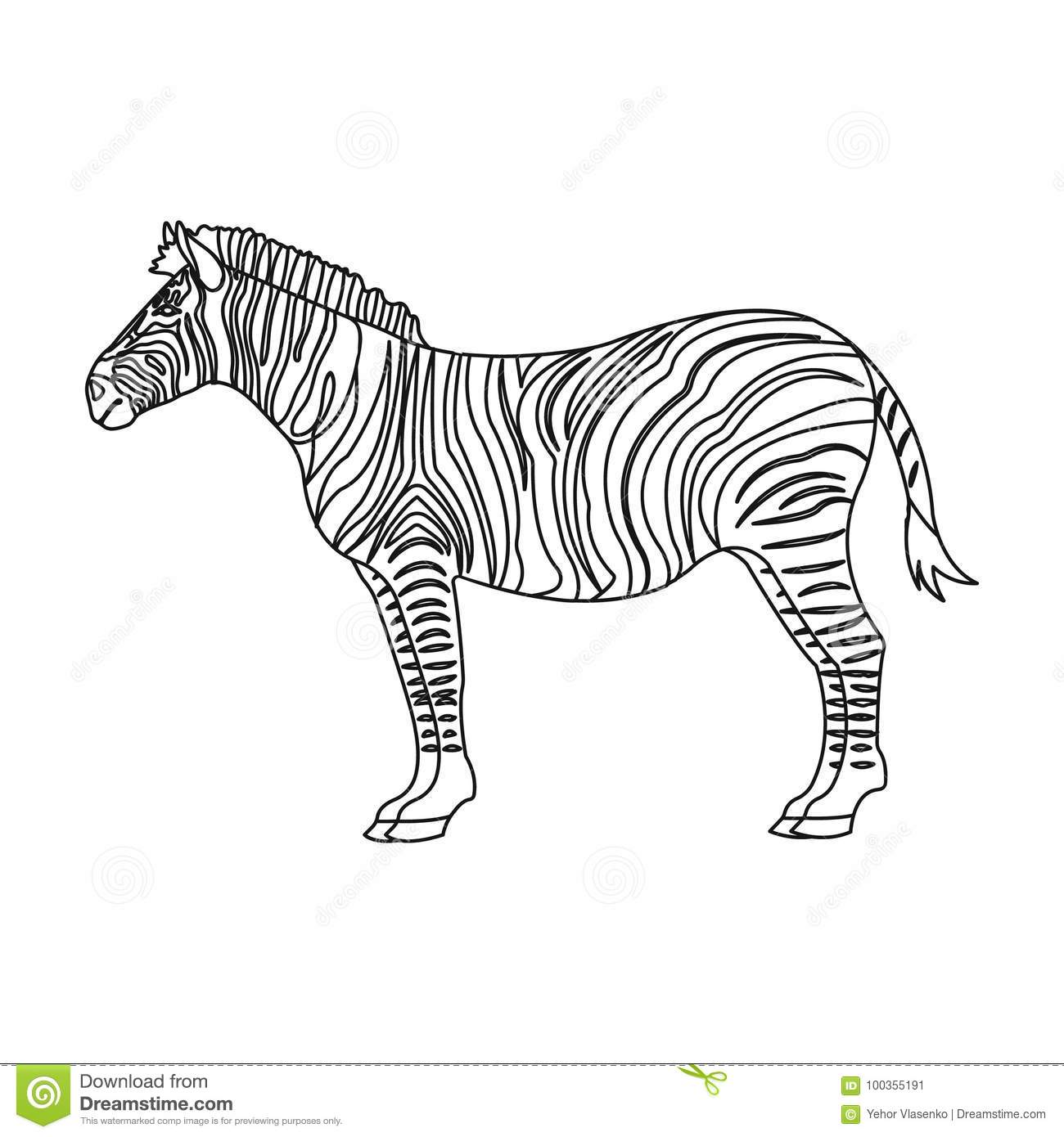 Zebra In African | Wiring Diagram Database