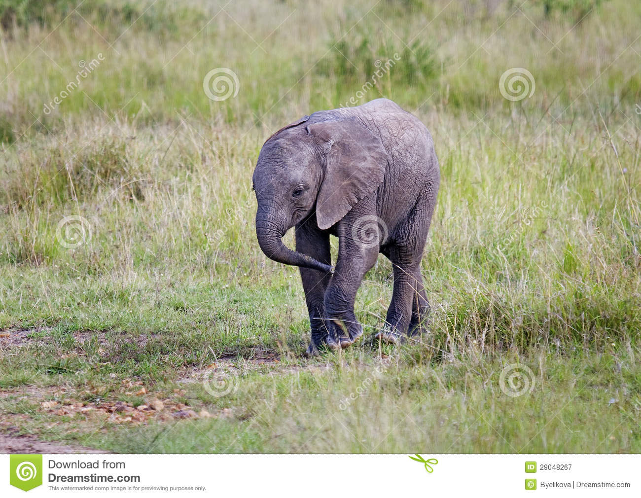Big Cute Baby Wallpaper African Elephant Baby Stock Image Image Of Conflict