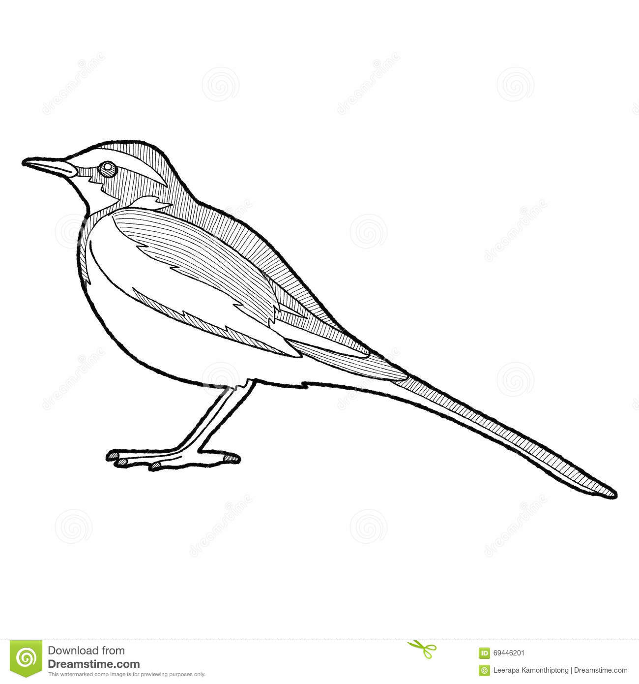 African Pied Wagtail stock vector. Illustration of line