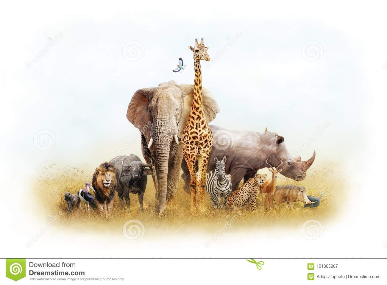African Animal Stock Images 164443 Photos