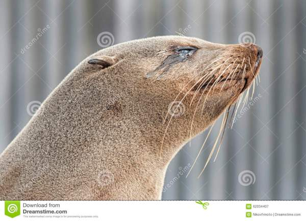 Animal Print Fur Seal Sea Lion Atlantic Walrus Pacific