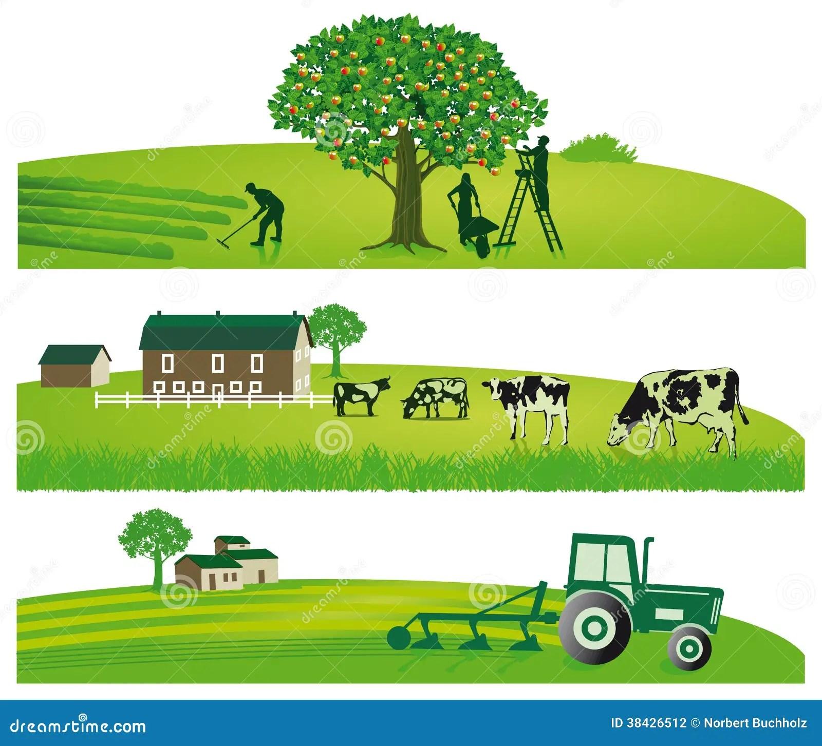 Agricoltura E Paesaggi Agricoli Illustrazione Vettoriale  Illustrazione di verde agricolo