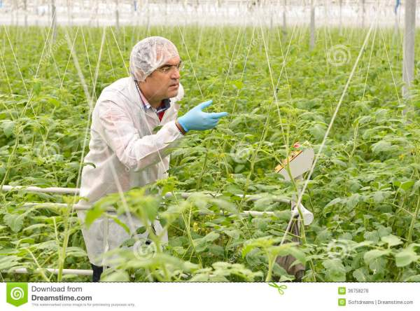 Agriculture Engineer Royalty Free Stock