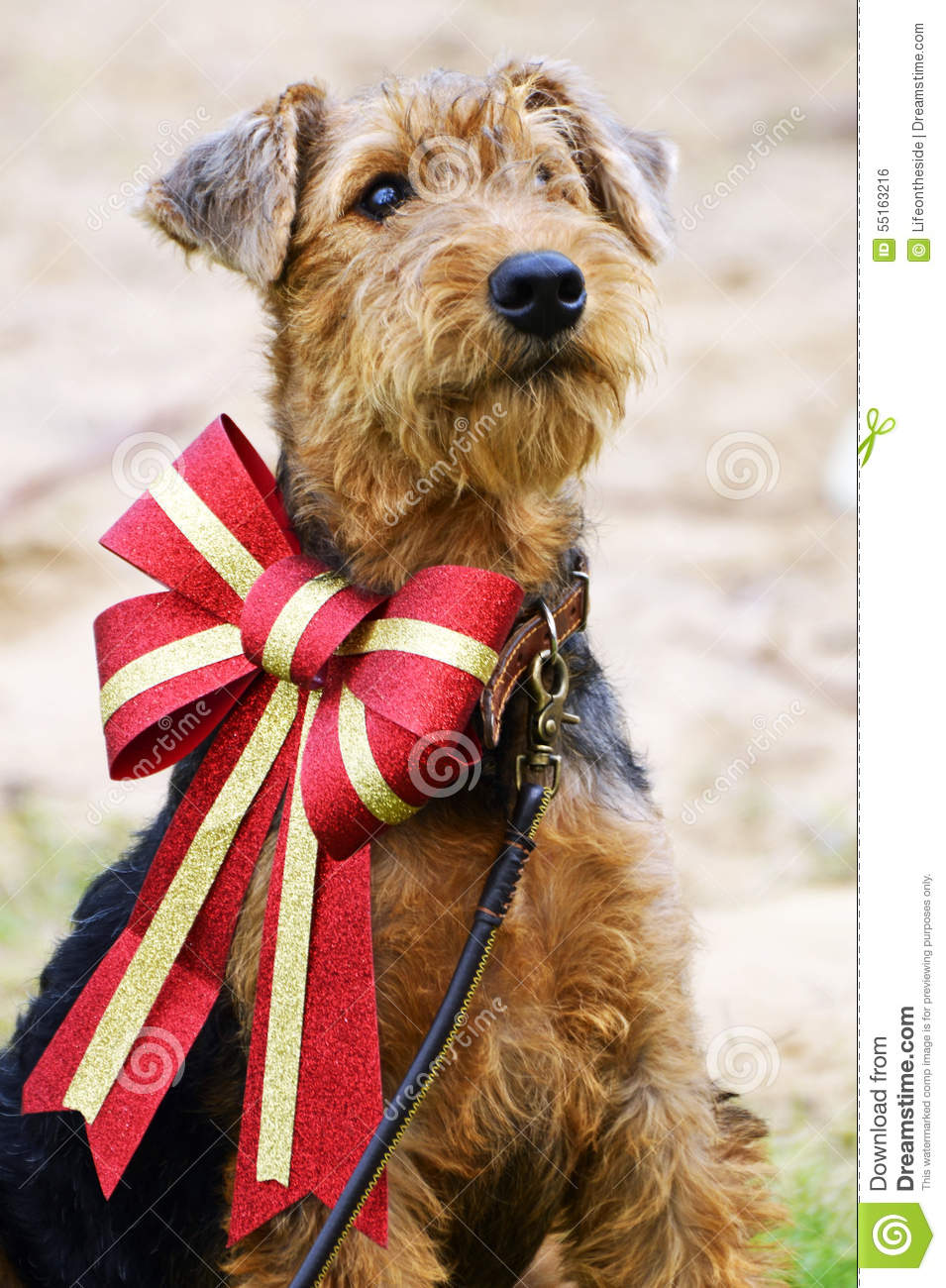 Airedale Terrier Fluffy Puppy Dog In Big Sparkly Christmas