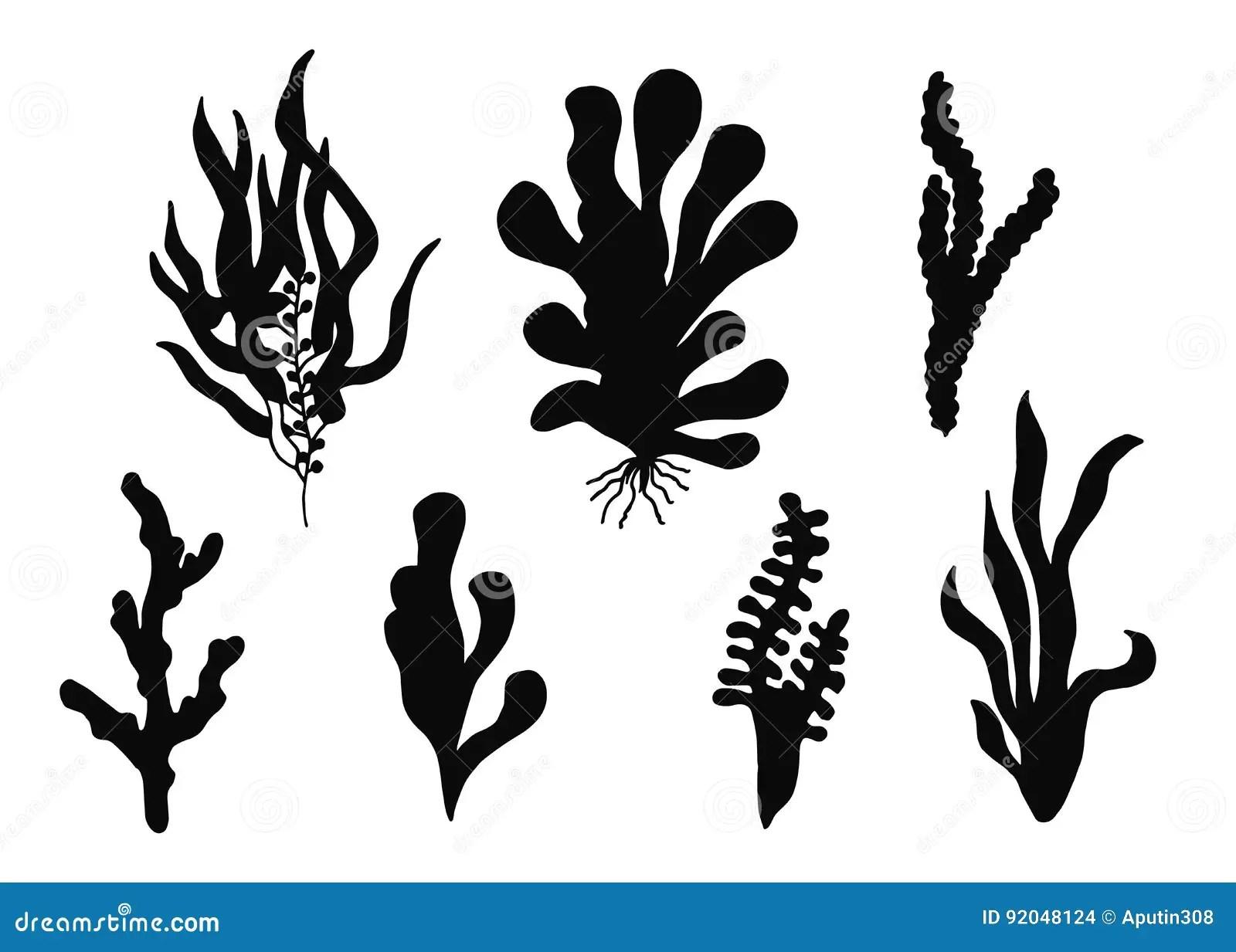 Seaweed Vector Silhouette Set Cartoon Vector