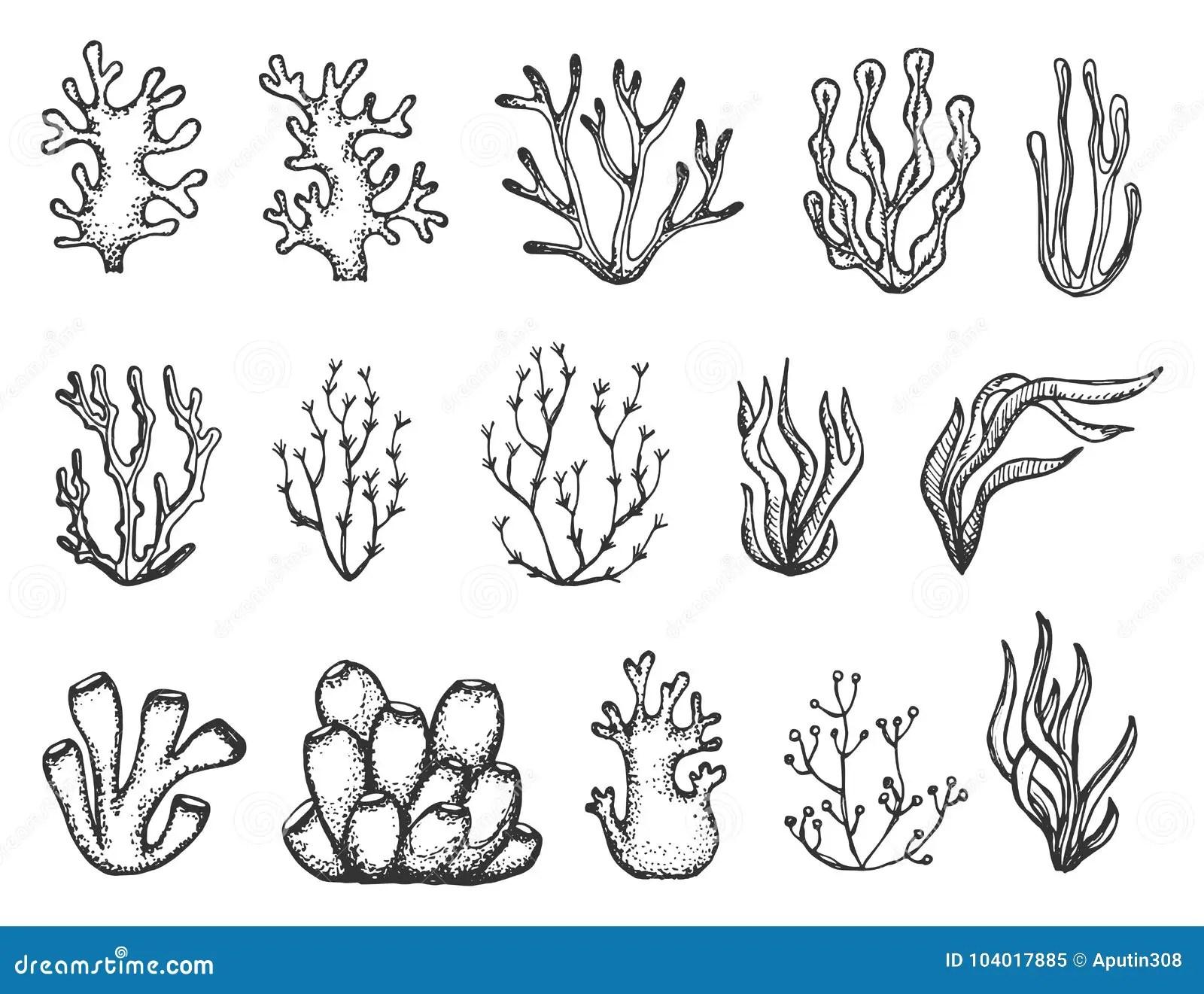 Algen Und Korallen Eingestellte Skizze Vektor Abbildung