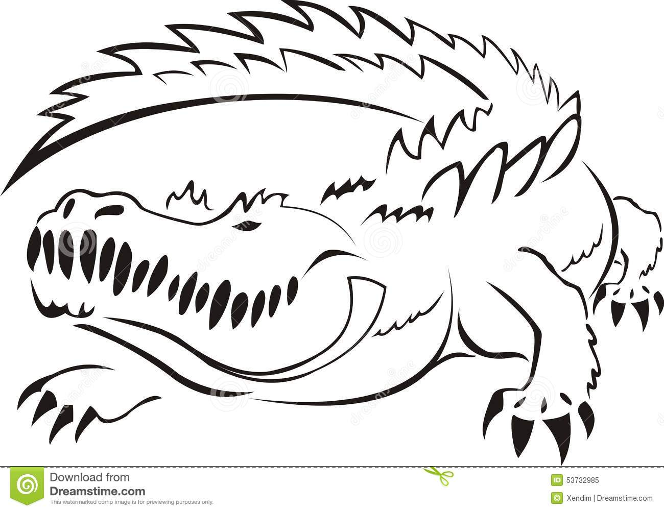 Alligator Stock Vector Illustration Of Diagram White