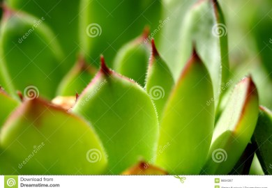 Serrated Stock Photos Images Pictures More Images