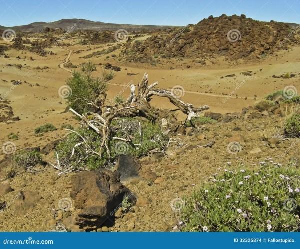 amazing desert panorama with dry