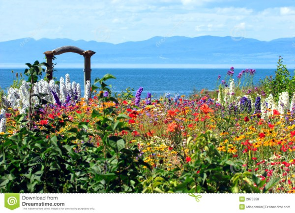 amazing flower garden royalty free