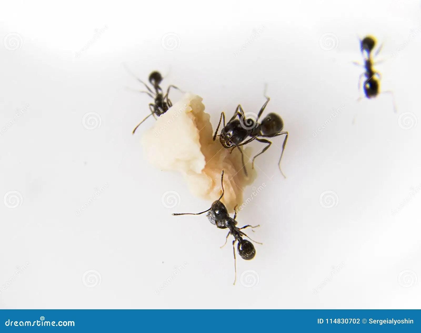 Ameisen In Der Küche