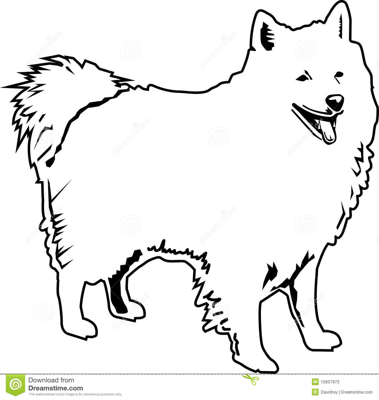 American Eskimo Black And White Stock Vector