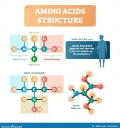 amino acids structure vector illustration serine molecule diagram  [ 1544 x 1689 Pixel ]