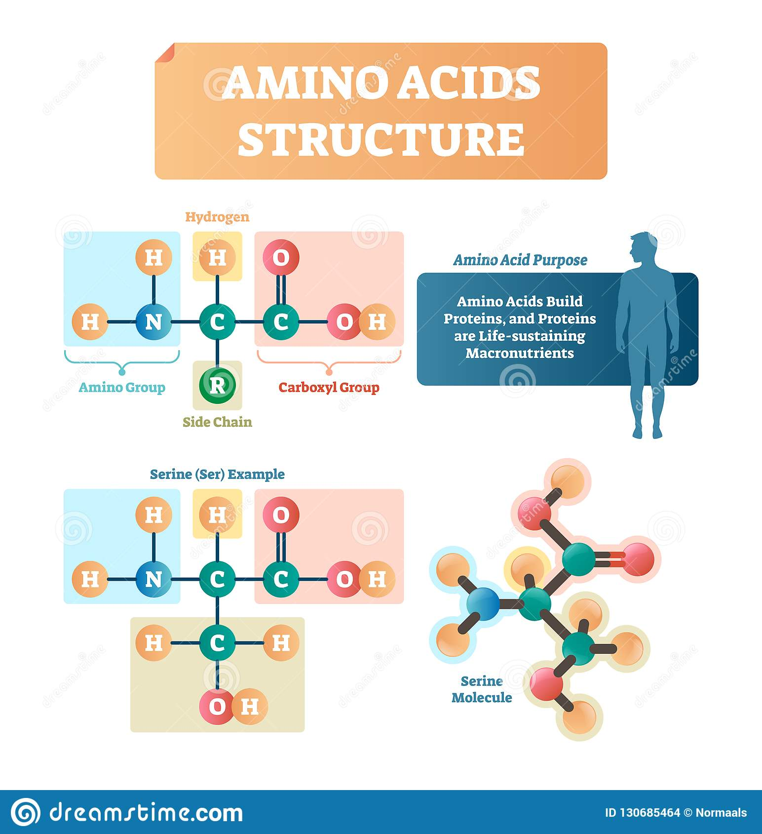 hight resolution of amino acids structure vector illustration serine molecule diagram