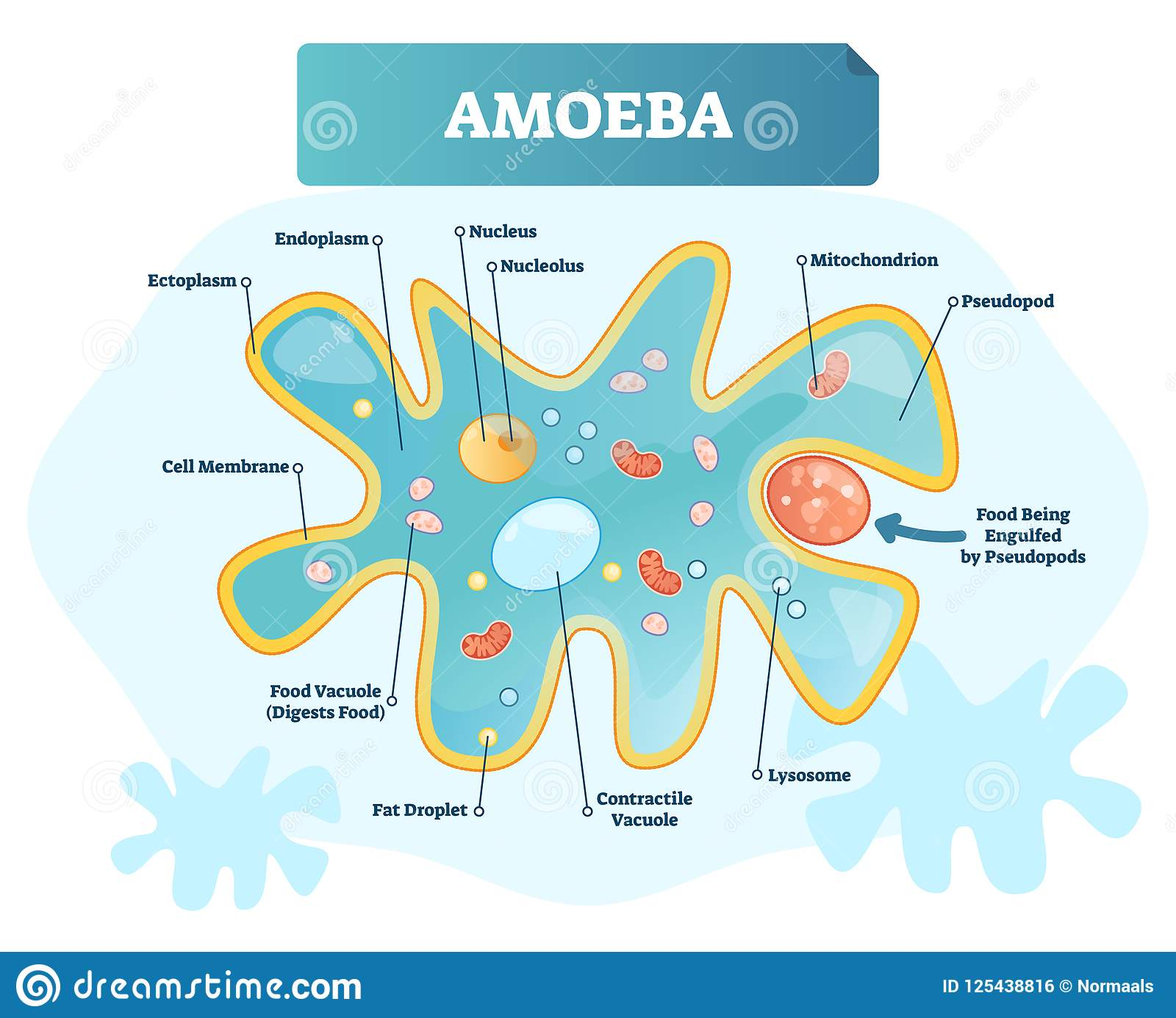 amoeba cell diagram wiring two way dimmer switch cartoons illustrations and vector stock images