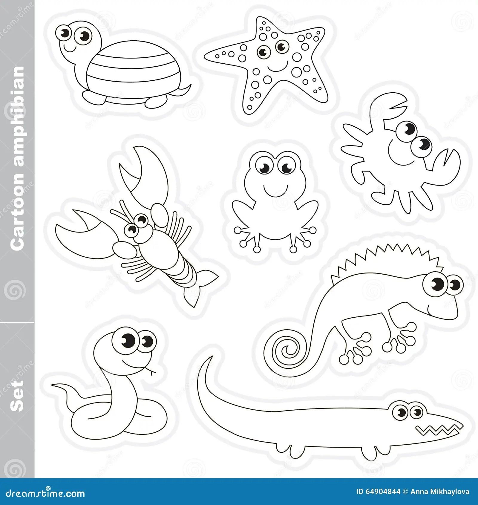 Amphibian Set In Vector Stock Vector Illustration Of