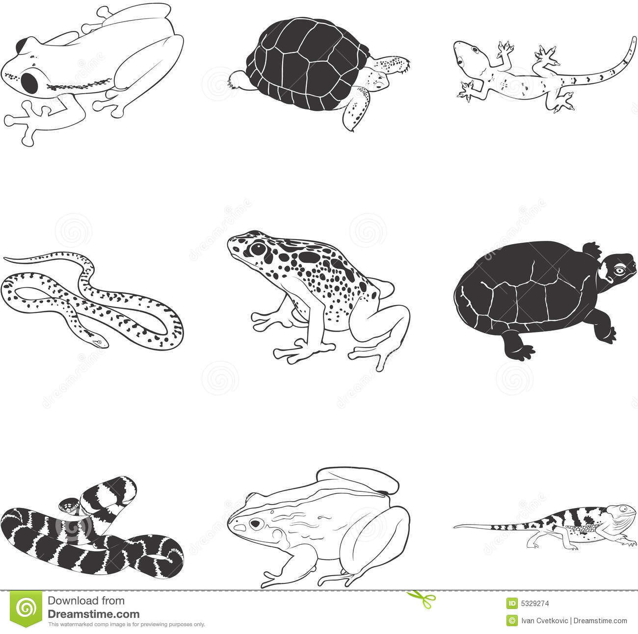Amphibians And Reptiles Stock Vector Illustration Of