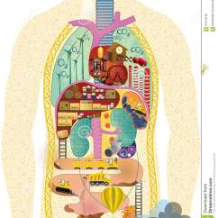 Liver And Spleen Diagram Ford Mondeo Mk4 Radio Wiring Anatomical Cartoon Map Stock Illustration - Image: 61074136